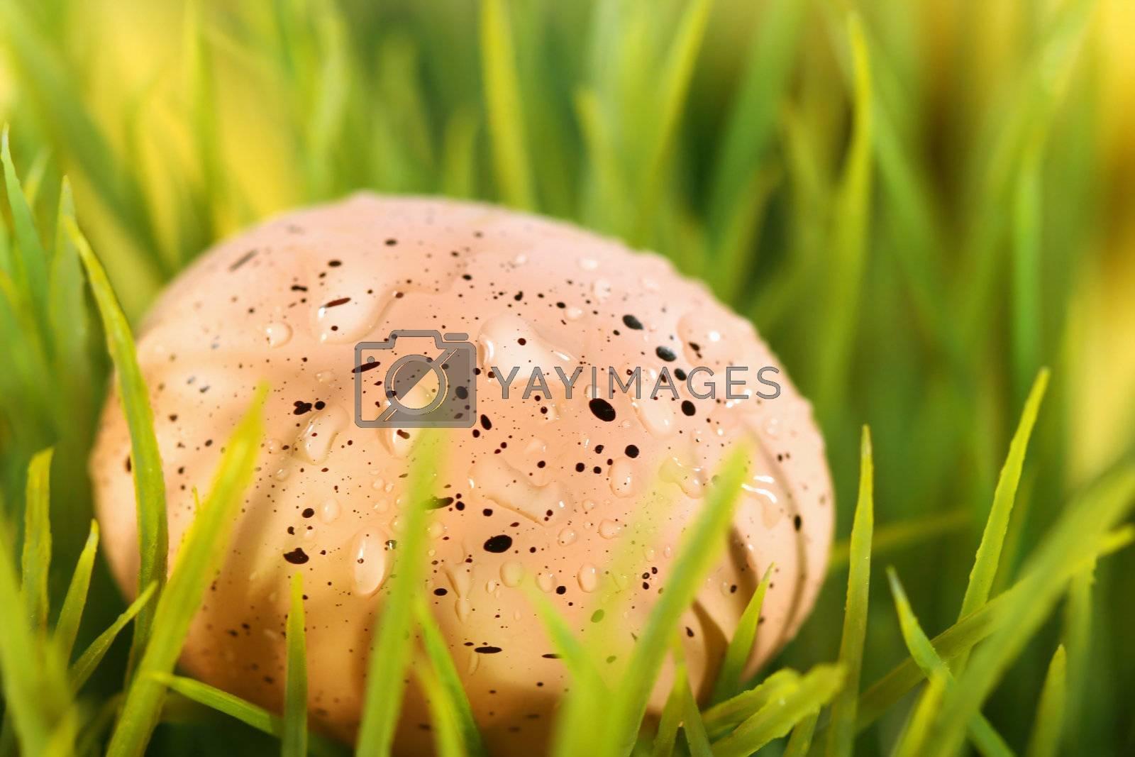 Pink Easter egg hidden in the grass