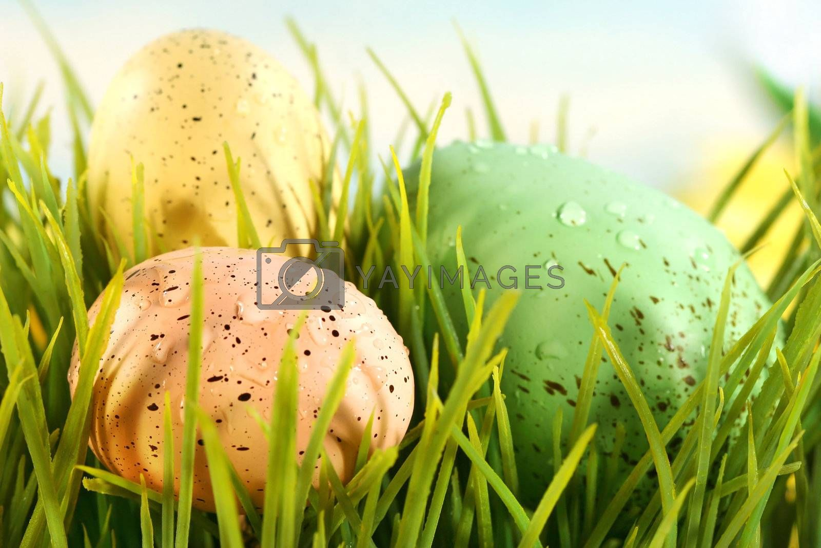 Three colored eggs hidden in the grass
