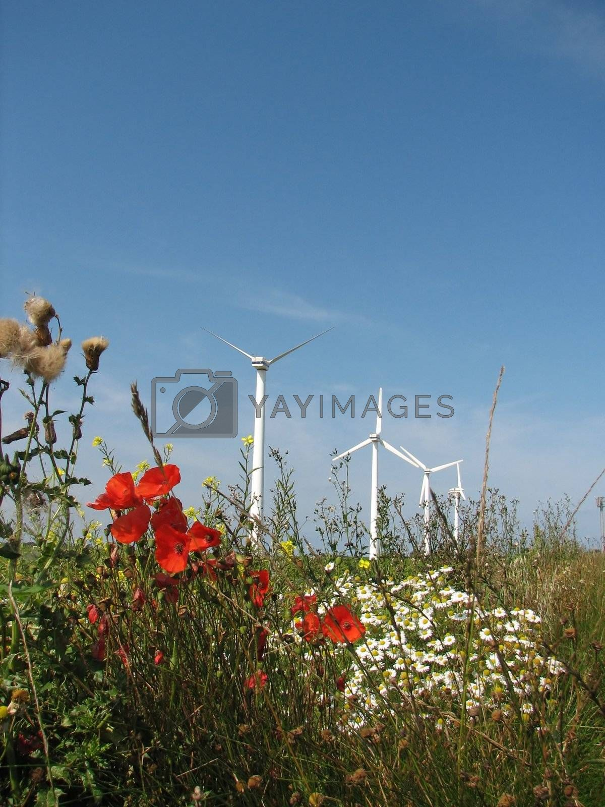 windmills in a flowerfield by brigg