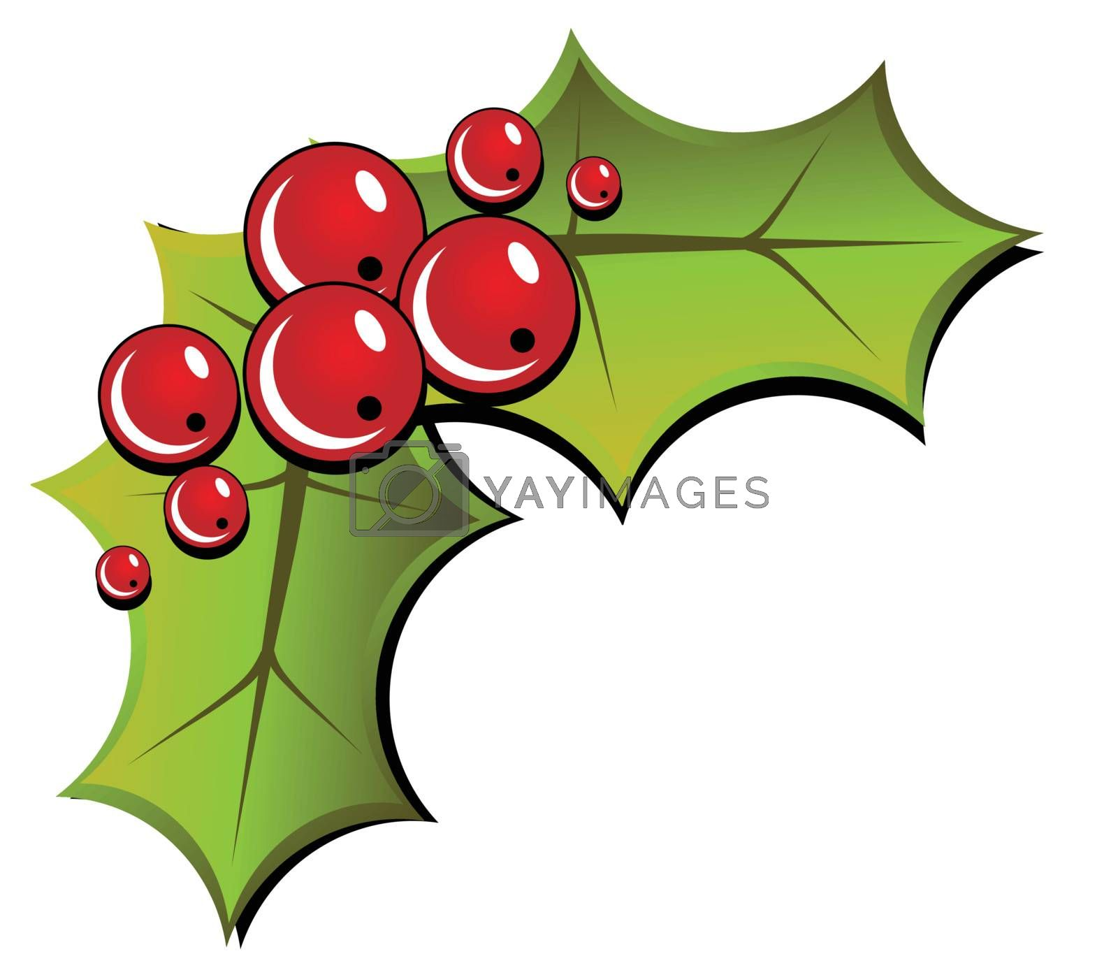 Christmas holly isolated on white background (vector)