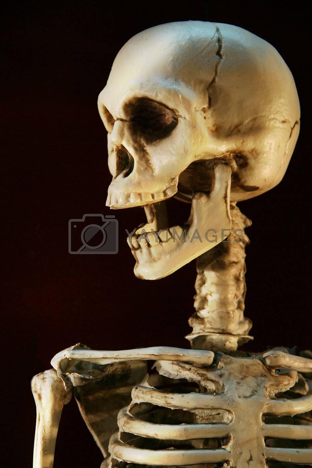 Halloween skeleton against a dark background