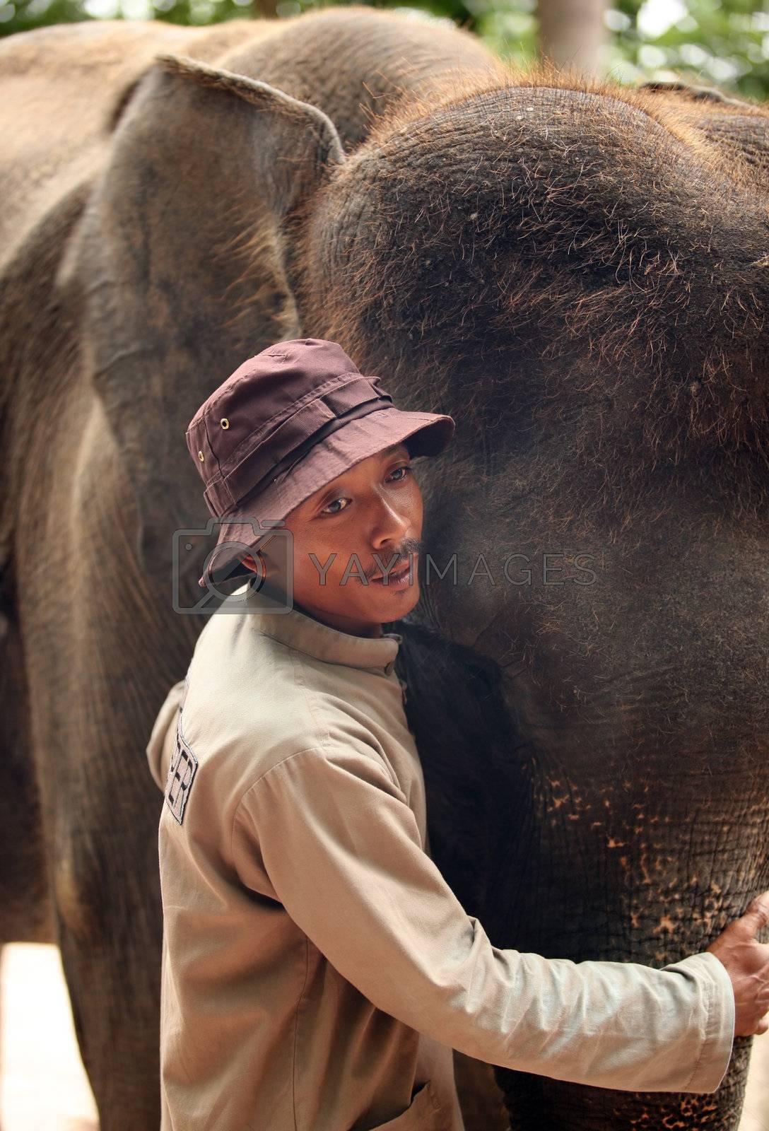 The big elephant and man. Bali zoo. Indonesia