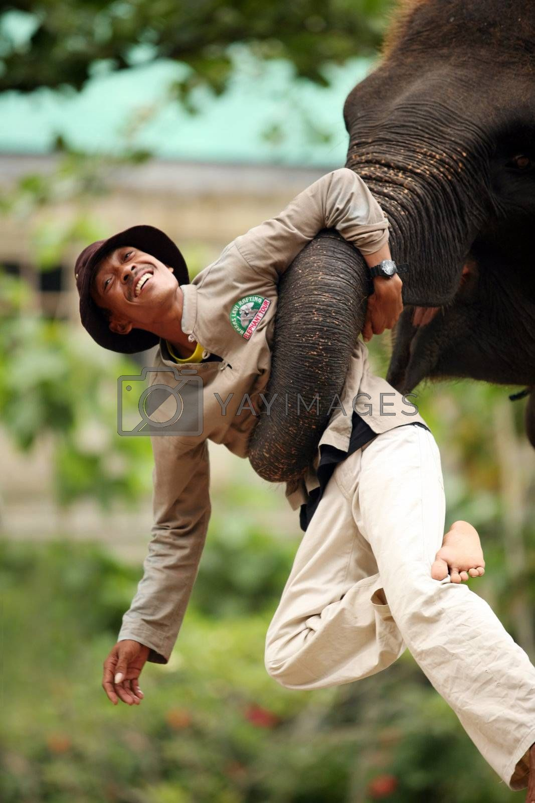 The big elephant holds a trunk the man. Bali. Indonesia