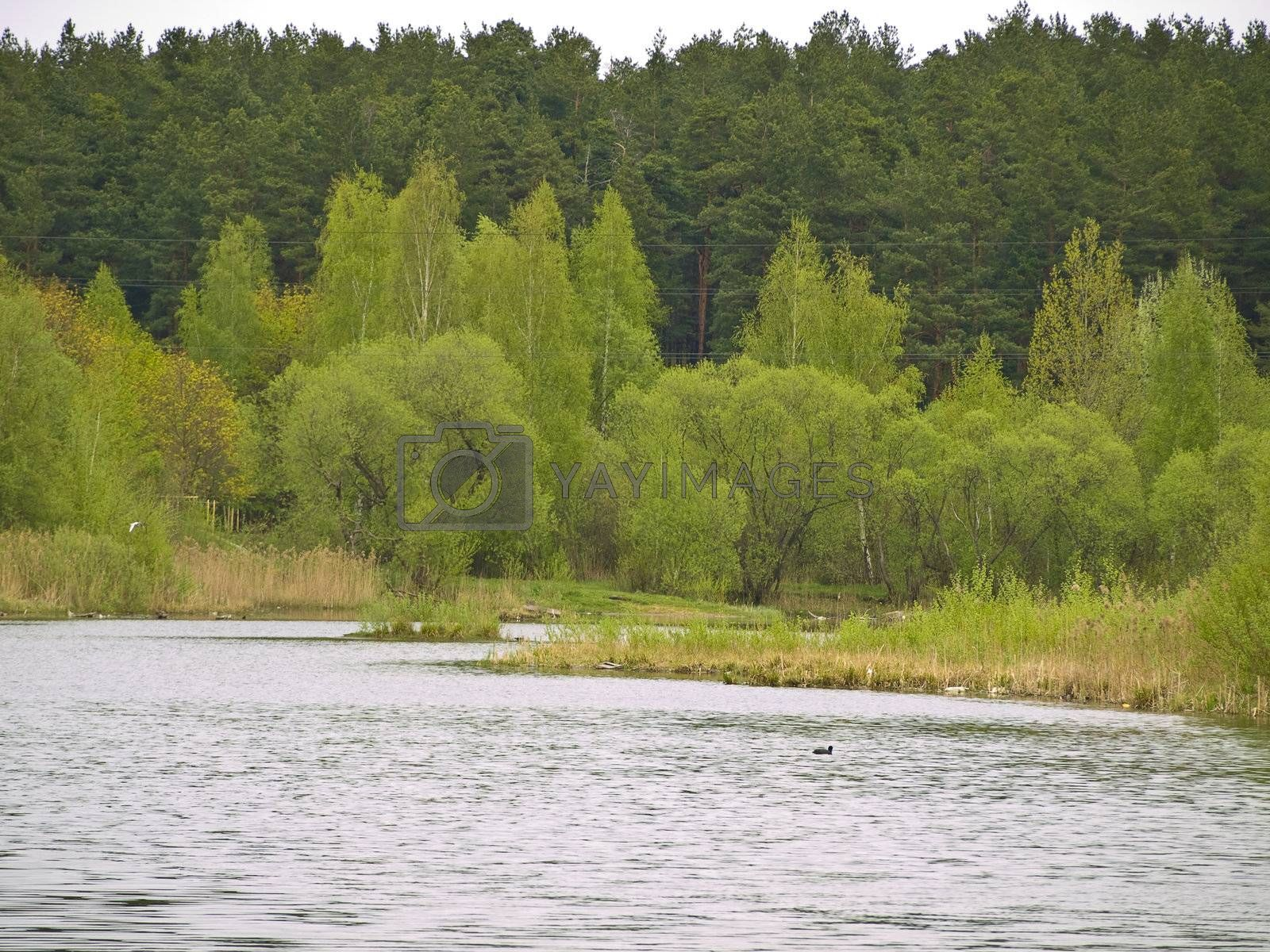 Rural lake with green bushes and forest at the background