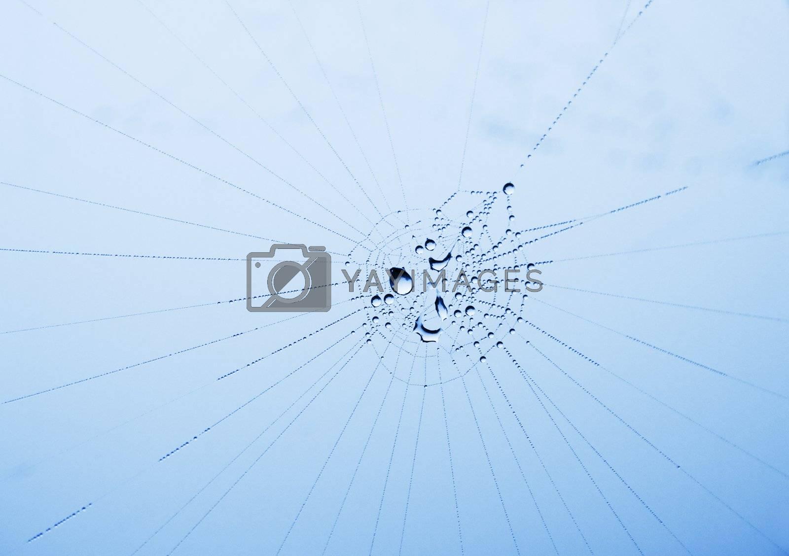 shiny dewdrops on a cobweb against an overcast sky; shallow DOF