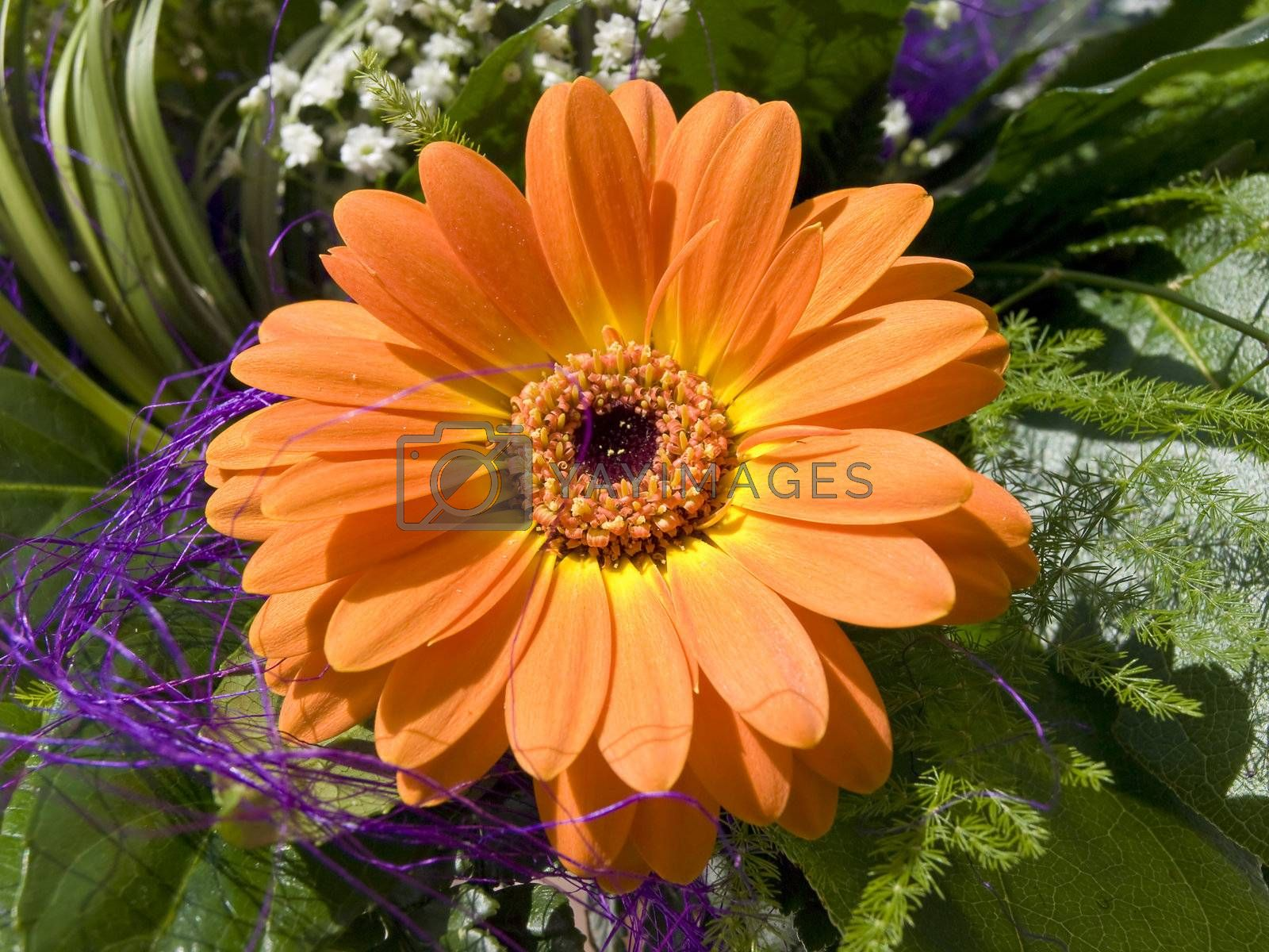 Gerbera flower in green decorations with green leaves