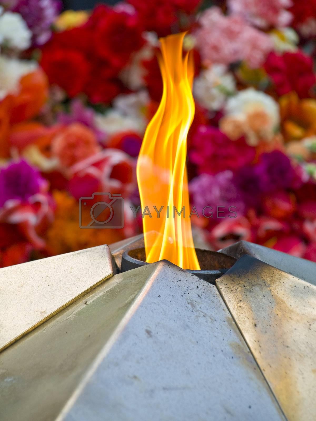 eternal light against the multicolored flowers