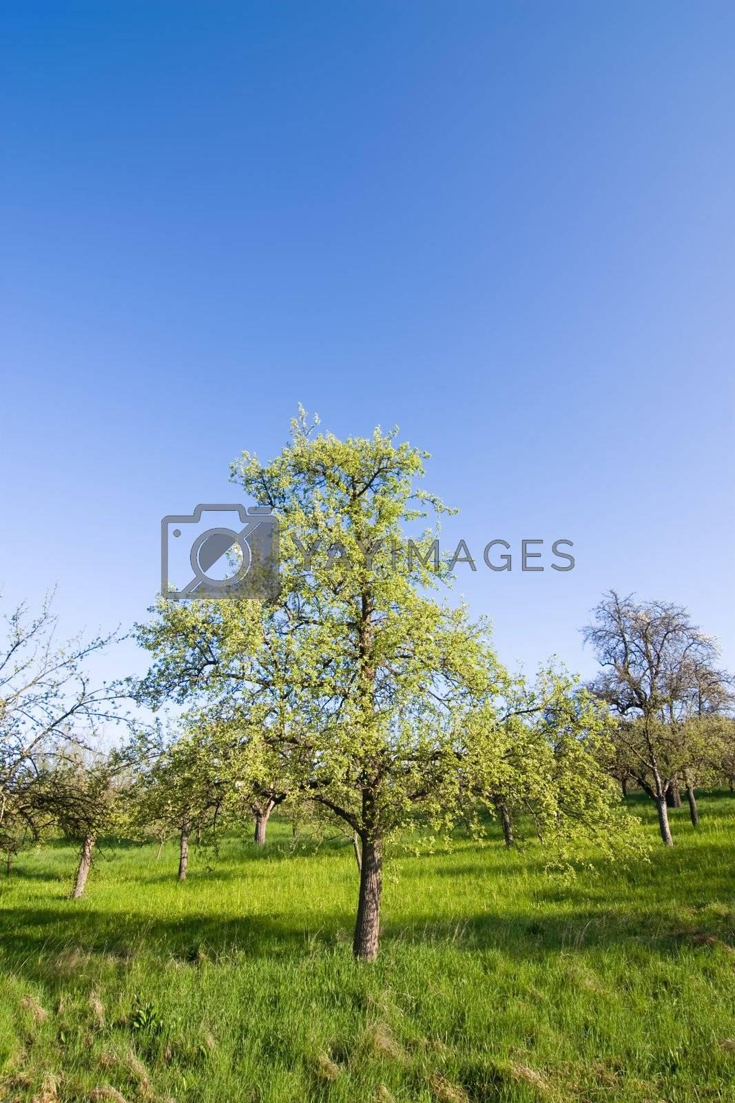 Spring in Germany