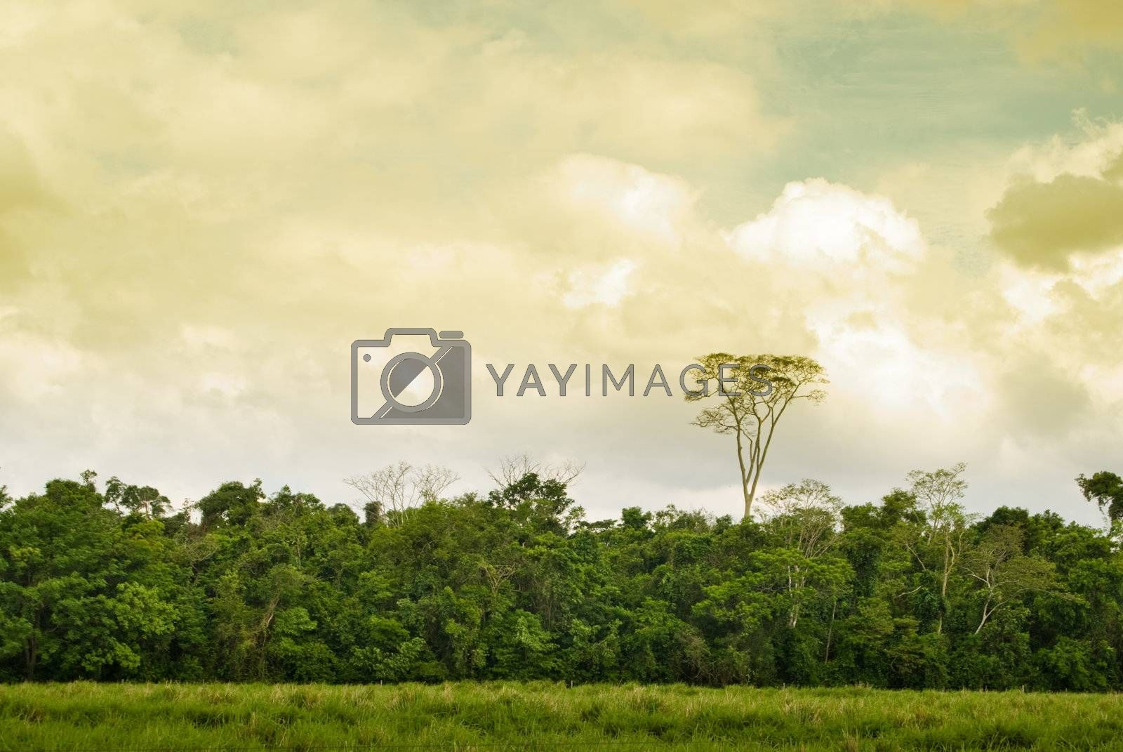 Tree on the forest and pasture in brazilian farmland, western Parana State, southern Brazil.