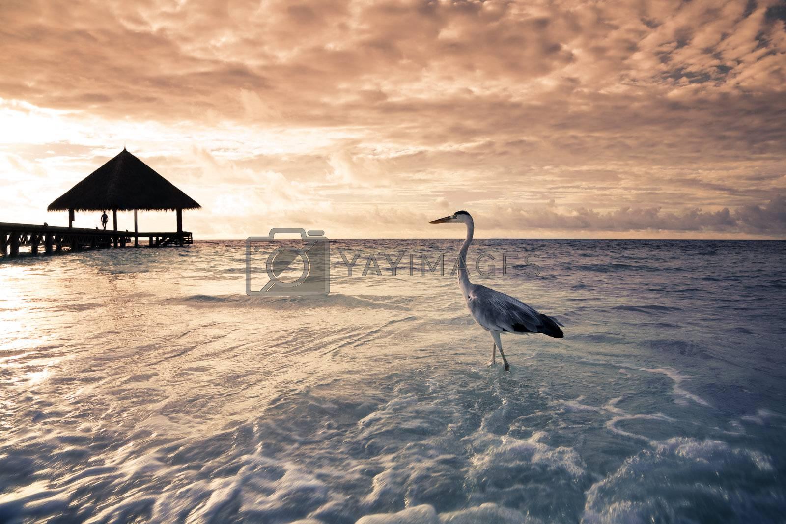 tropical beach: flamingo at the dawn. Dramatic sky