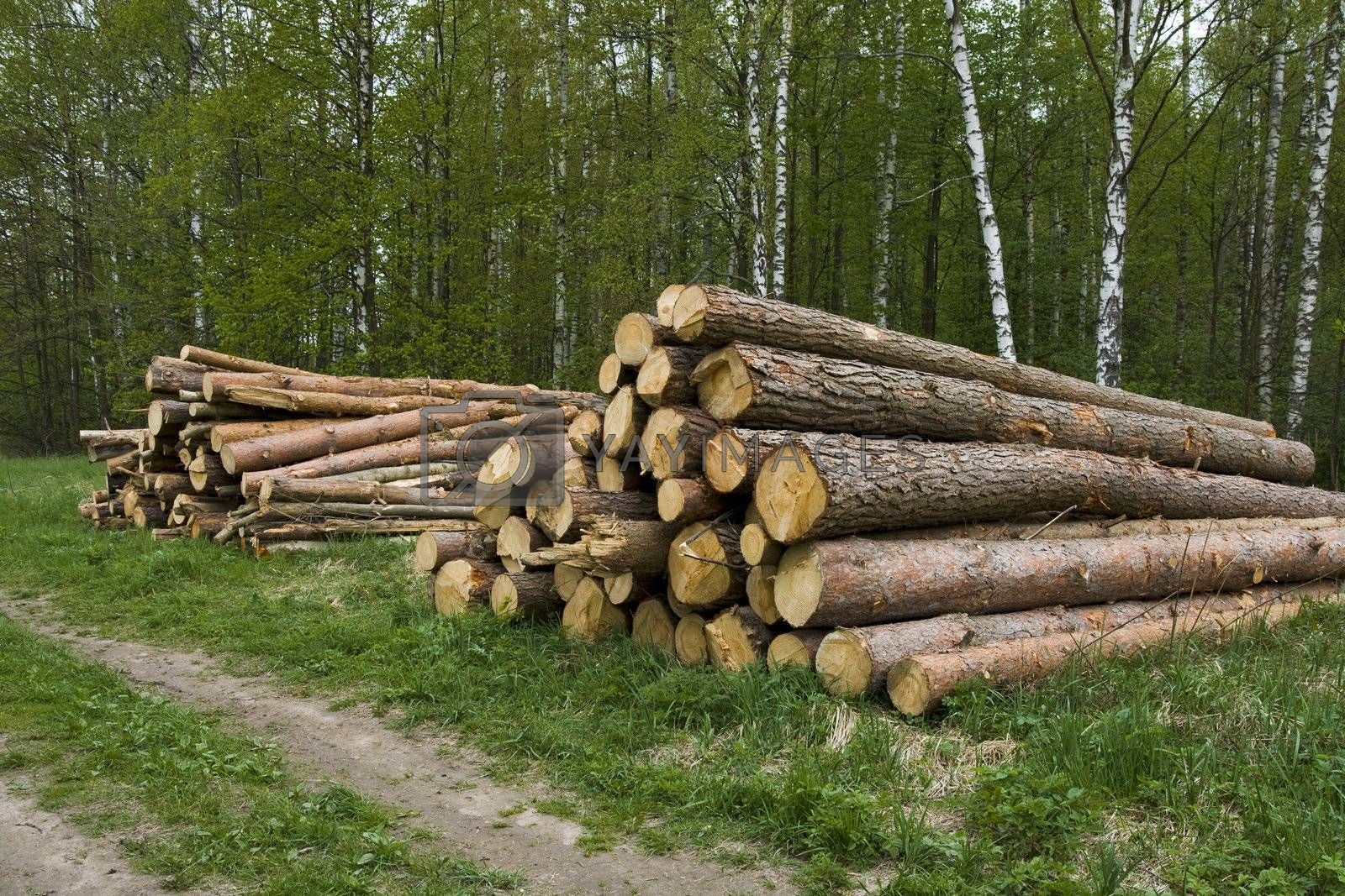 Pine logs for construction of the house.