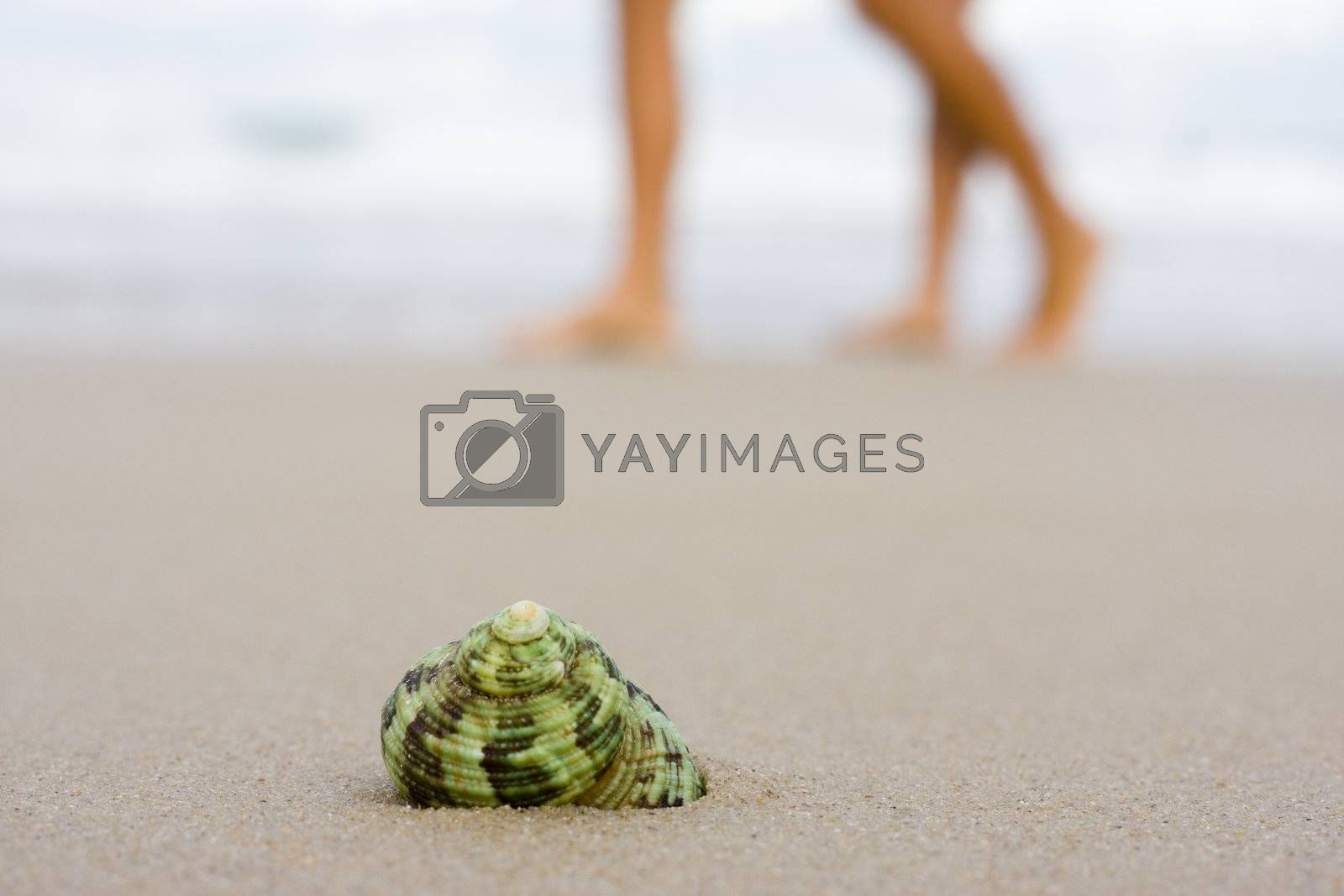 Shell on a beach with blurred people walking in the background