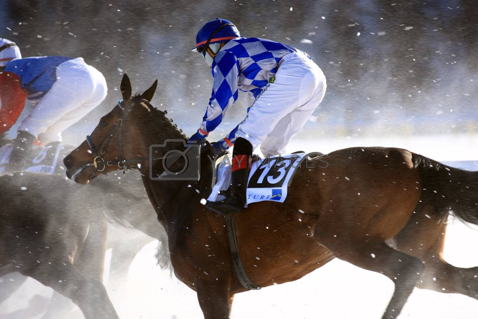 Royalty free image of Horse Race on the Snow by monner