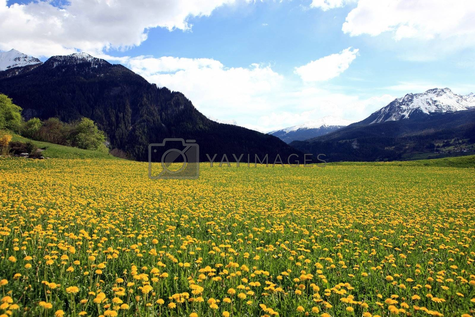 Royalty free image of Summer Landscape by monner