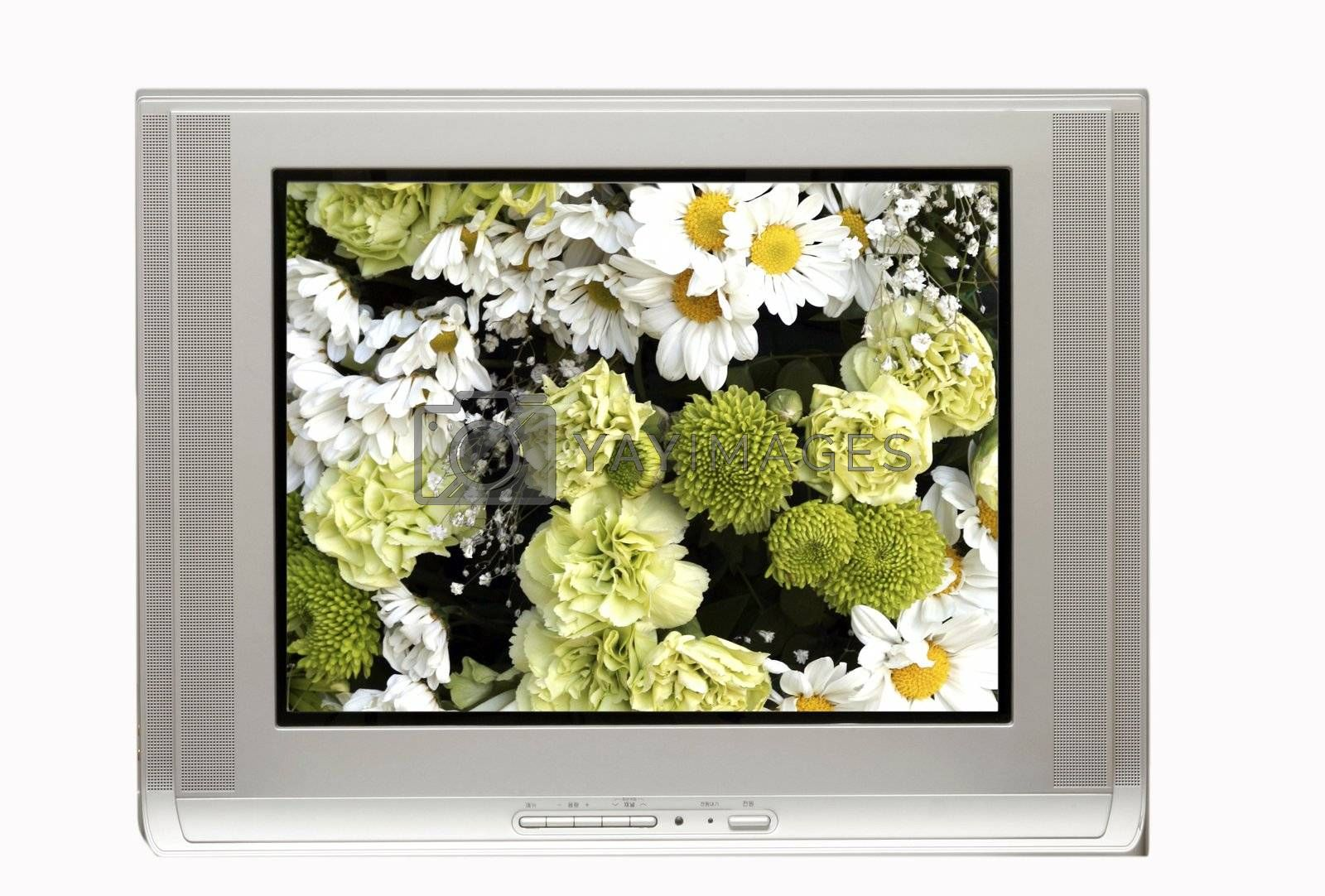 TV and White flowers by sacatani