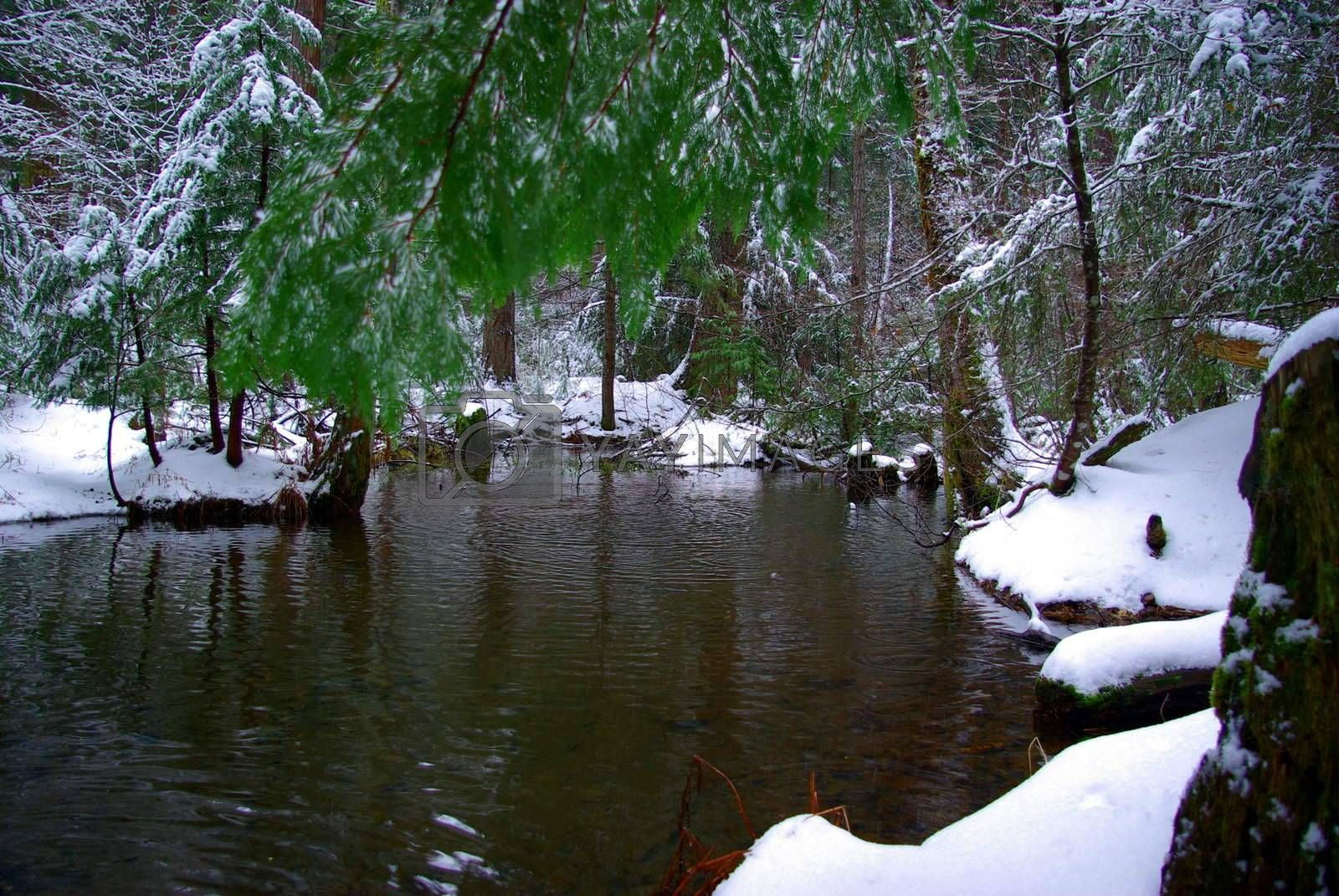 Winter Pond by bendicks