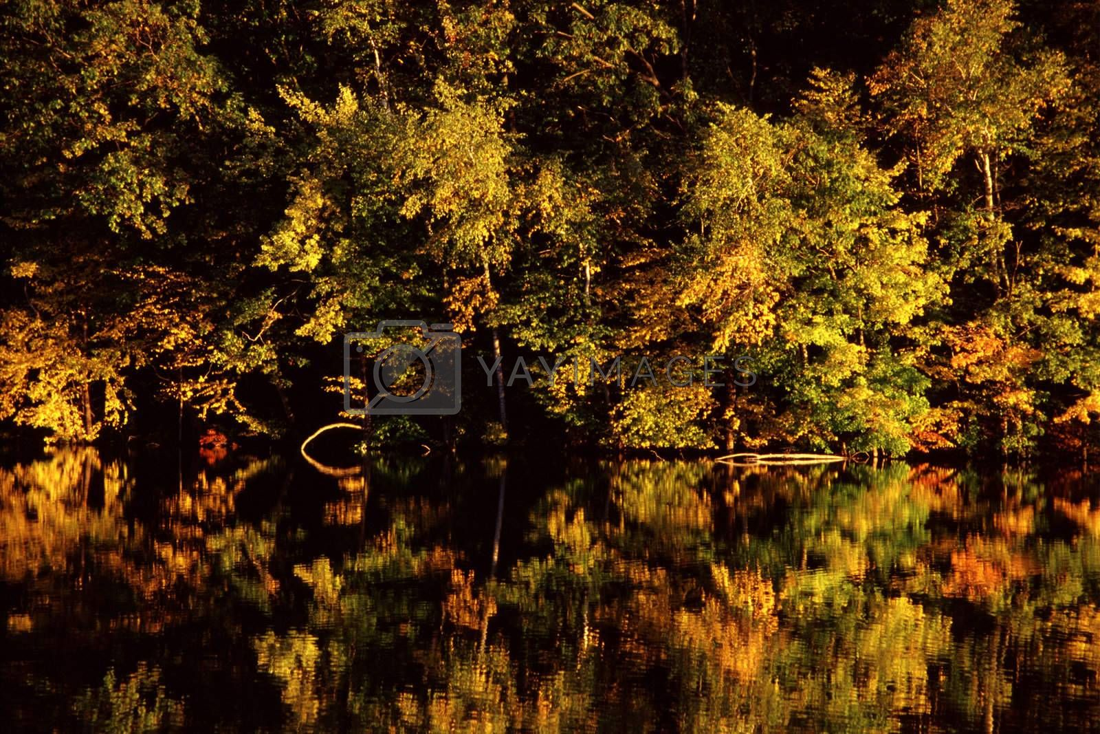 Some vivid foliage during autumn - a mirror image reflecting in the water.