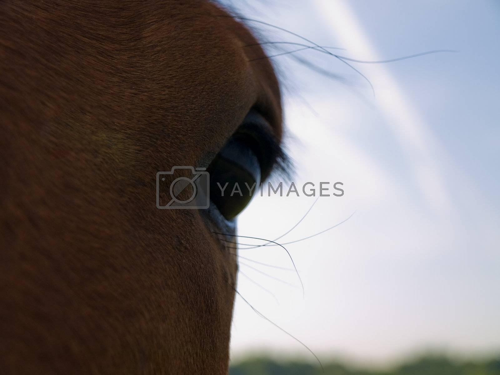 Horse in Beautiful Green Field in British Summer Morning