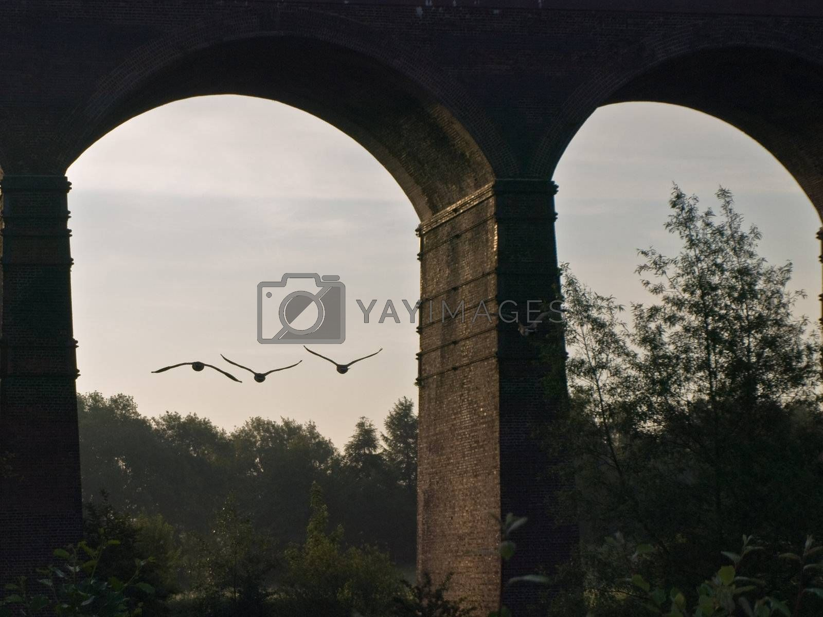 Flock of Canada Geese Flying In Formation Under a Victorian Viaduct