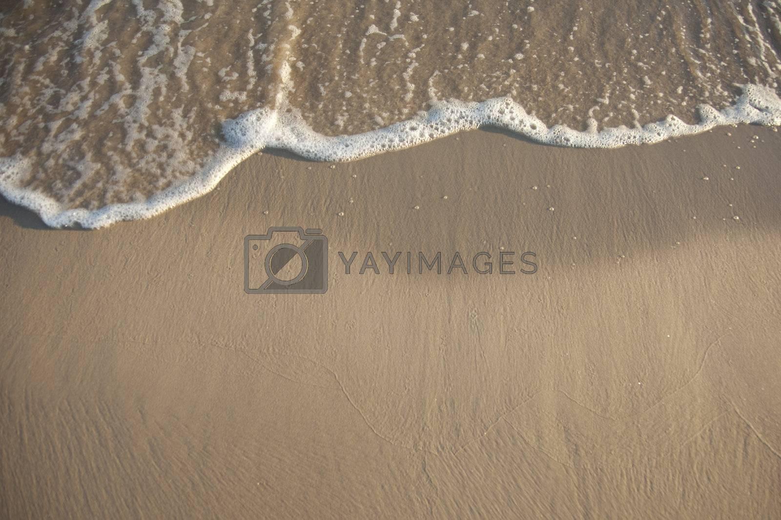 Shore beach by shiffti