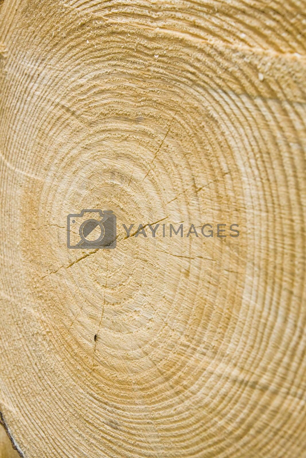 Close-up view of golden timber tree rings, suitable as background
