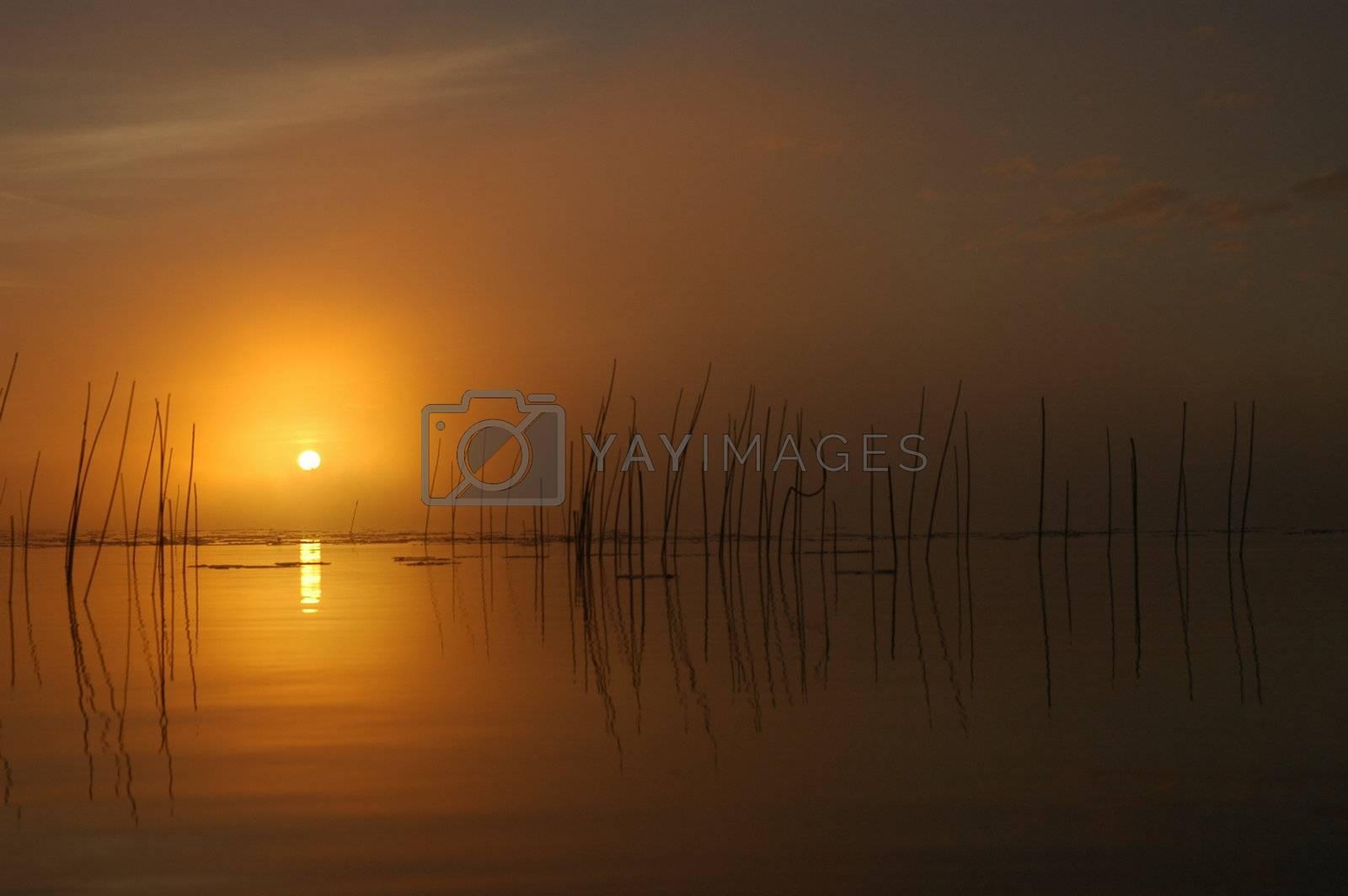 Foggy Sunrise by photopierre