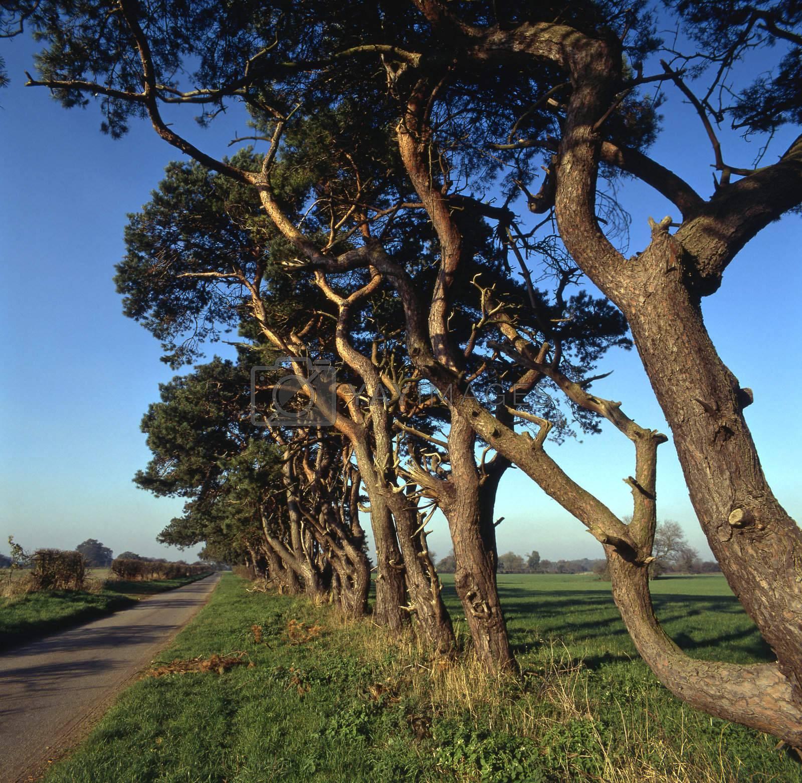 Tree lined by runamock