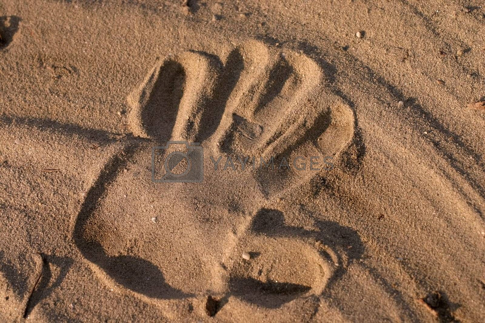 Hand print in sand with low sun