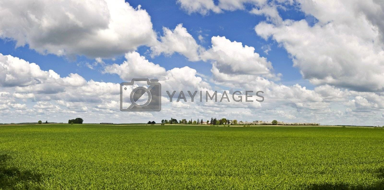 Landscape BIG panorama - field, trees and blue cloudy sky (ideal for background or wallpaper)