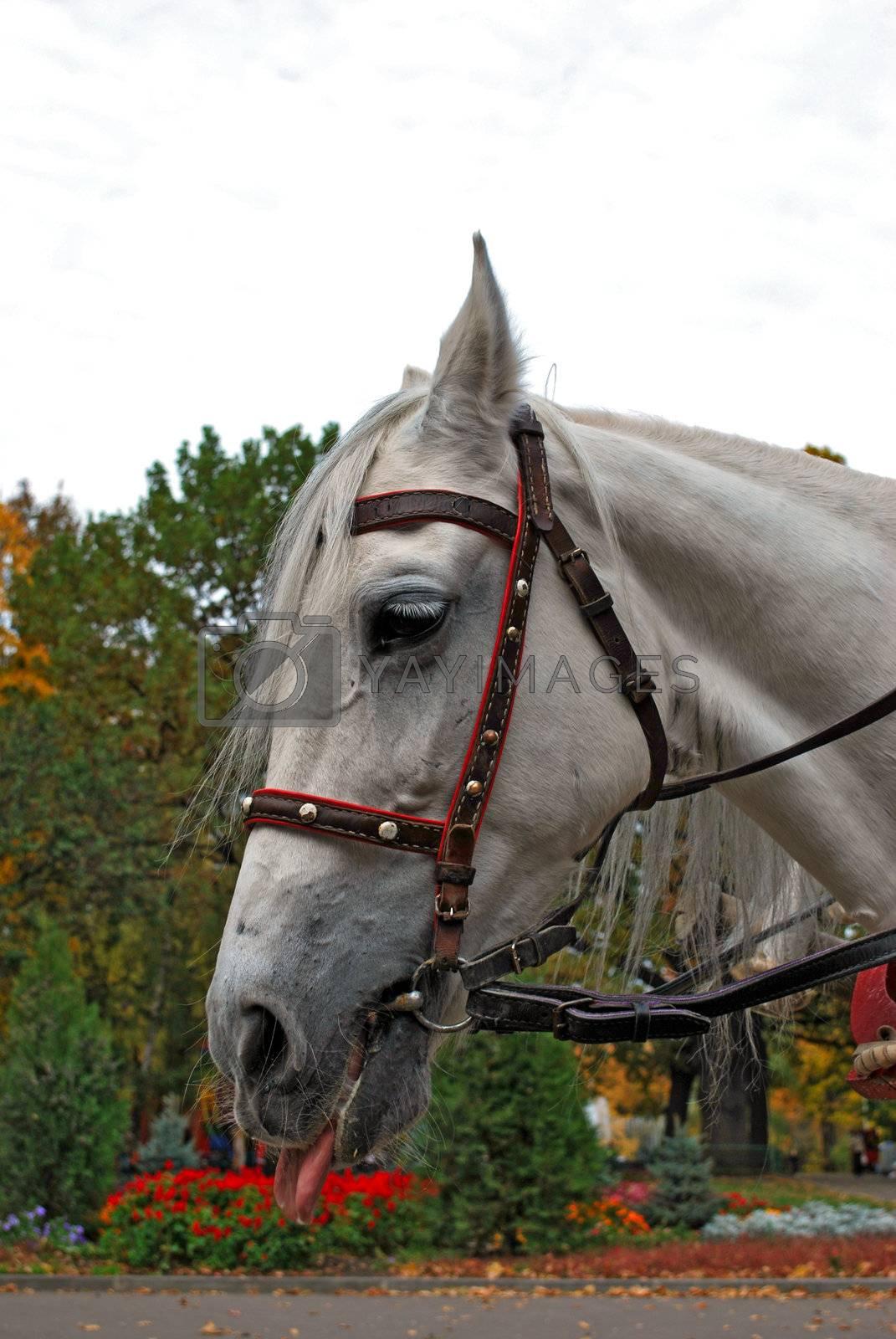 Horse by Skovoroda
