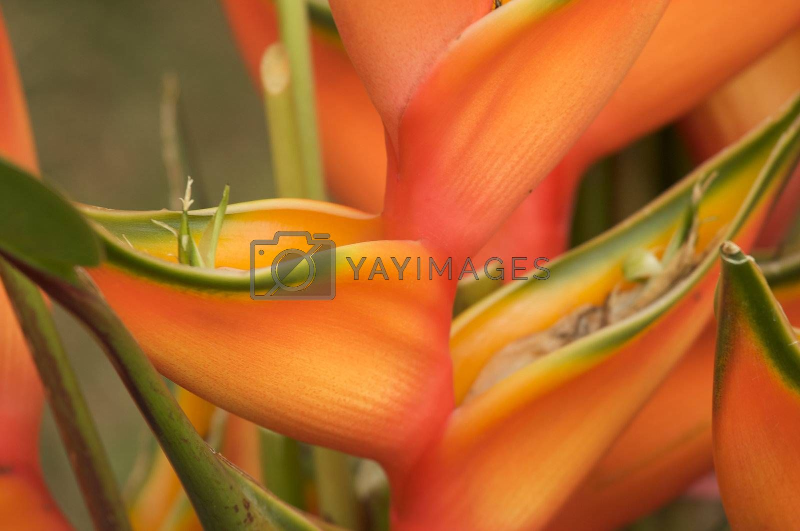 Exotic Tropical Flower Abstract in Bloom.