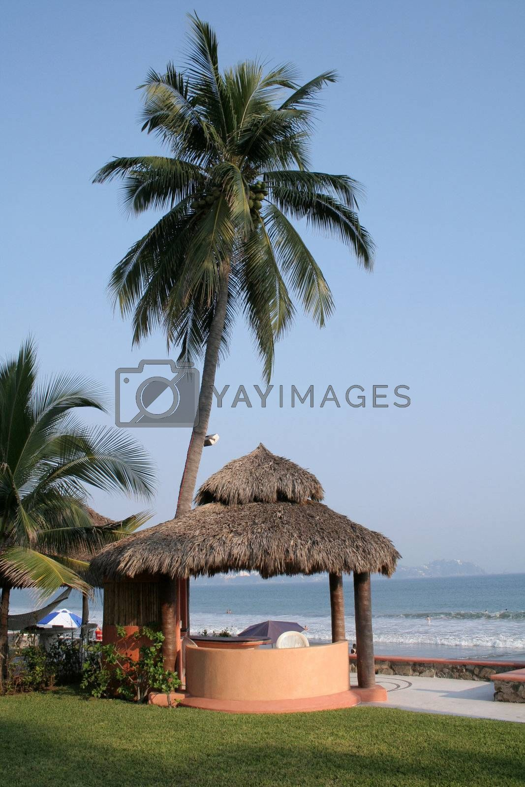 cabana under palm tree over looking ocean