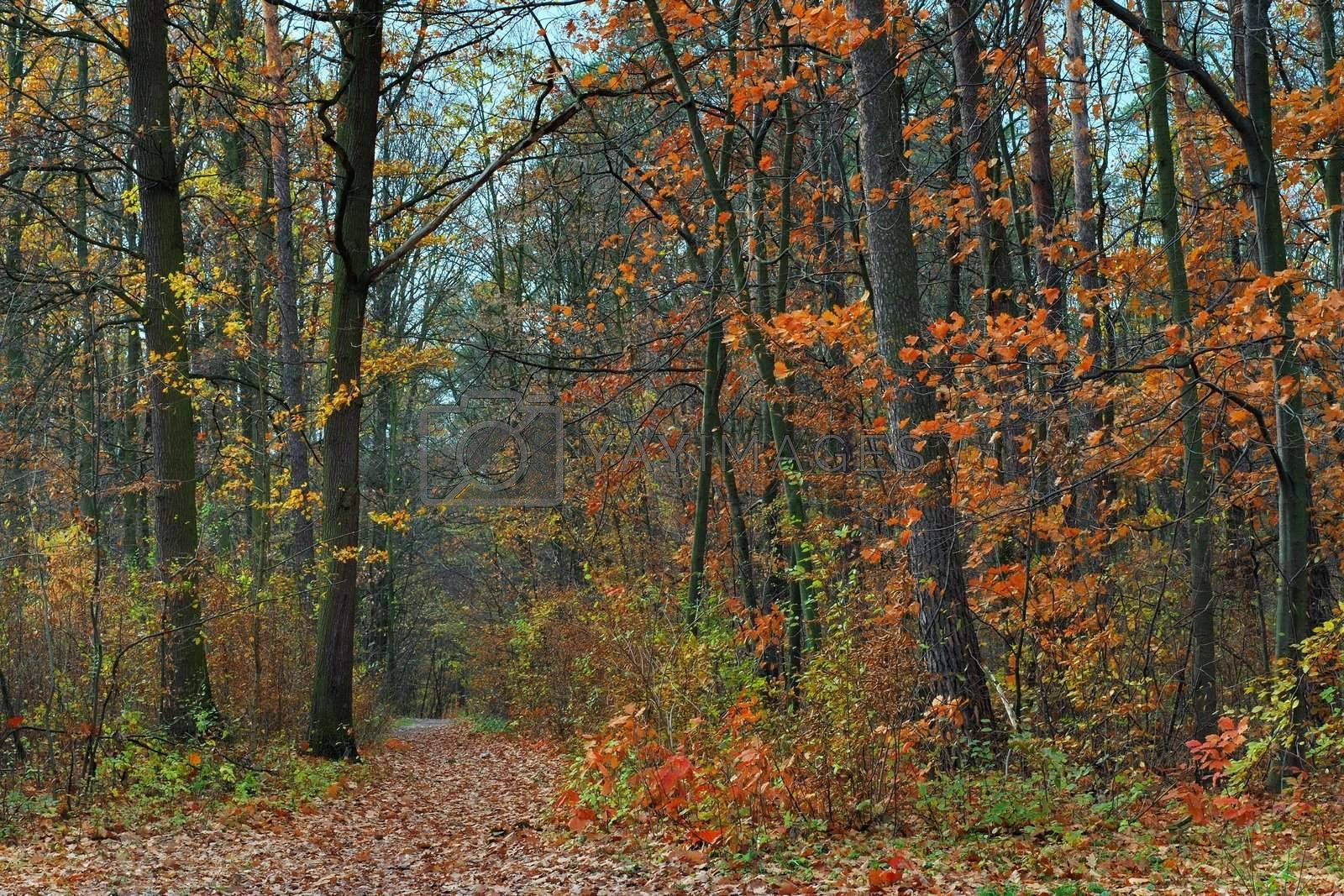 Fall in forest