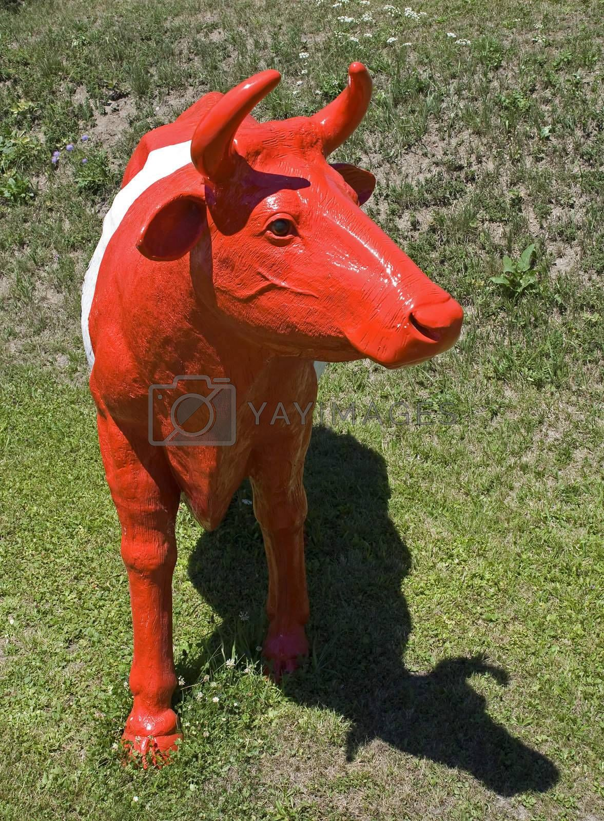 Portrait of a red and white cow standing on a meadow