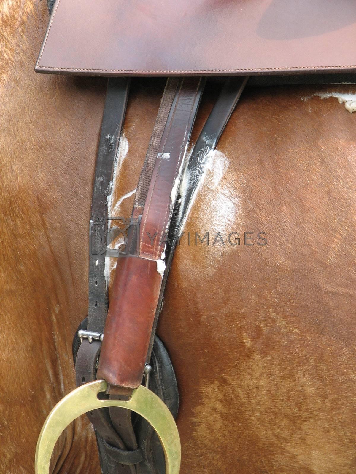 Horse riding, Detail