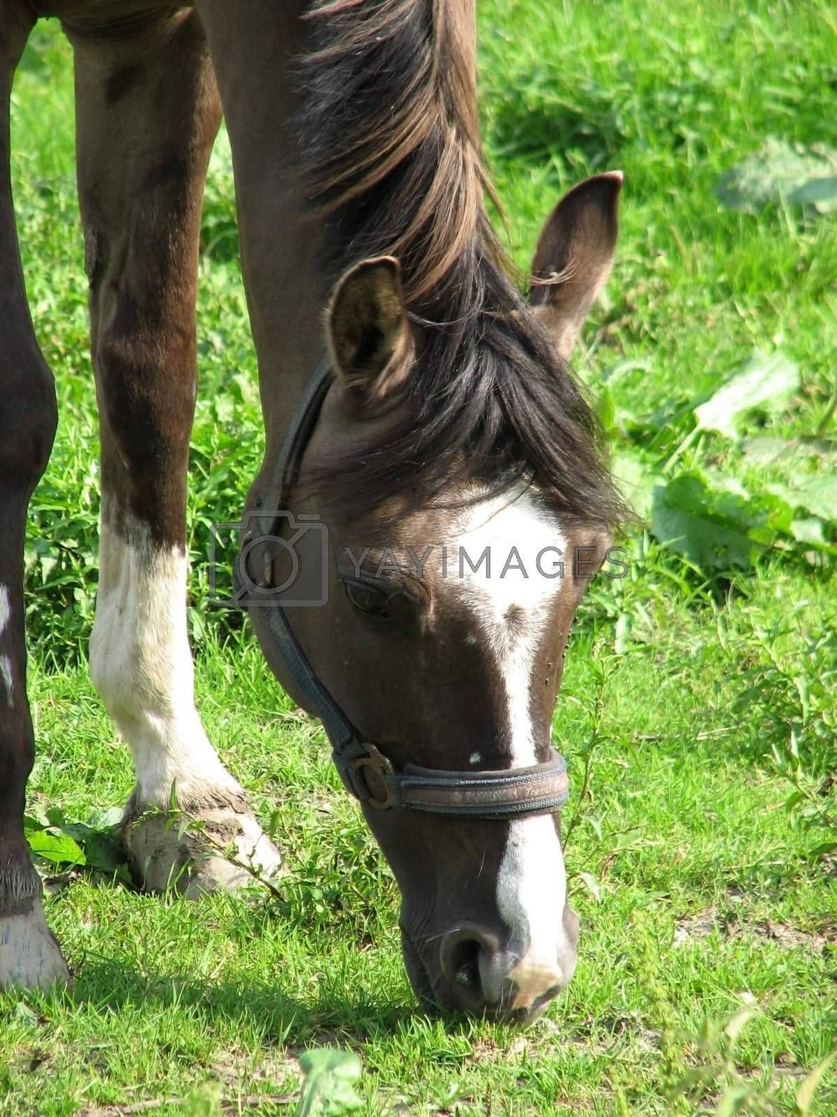 Horse in the pasture, close-up of the head