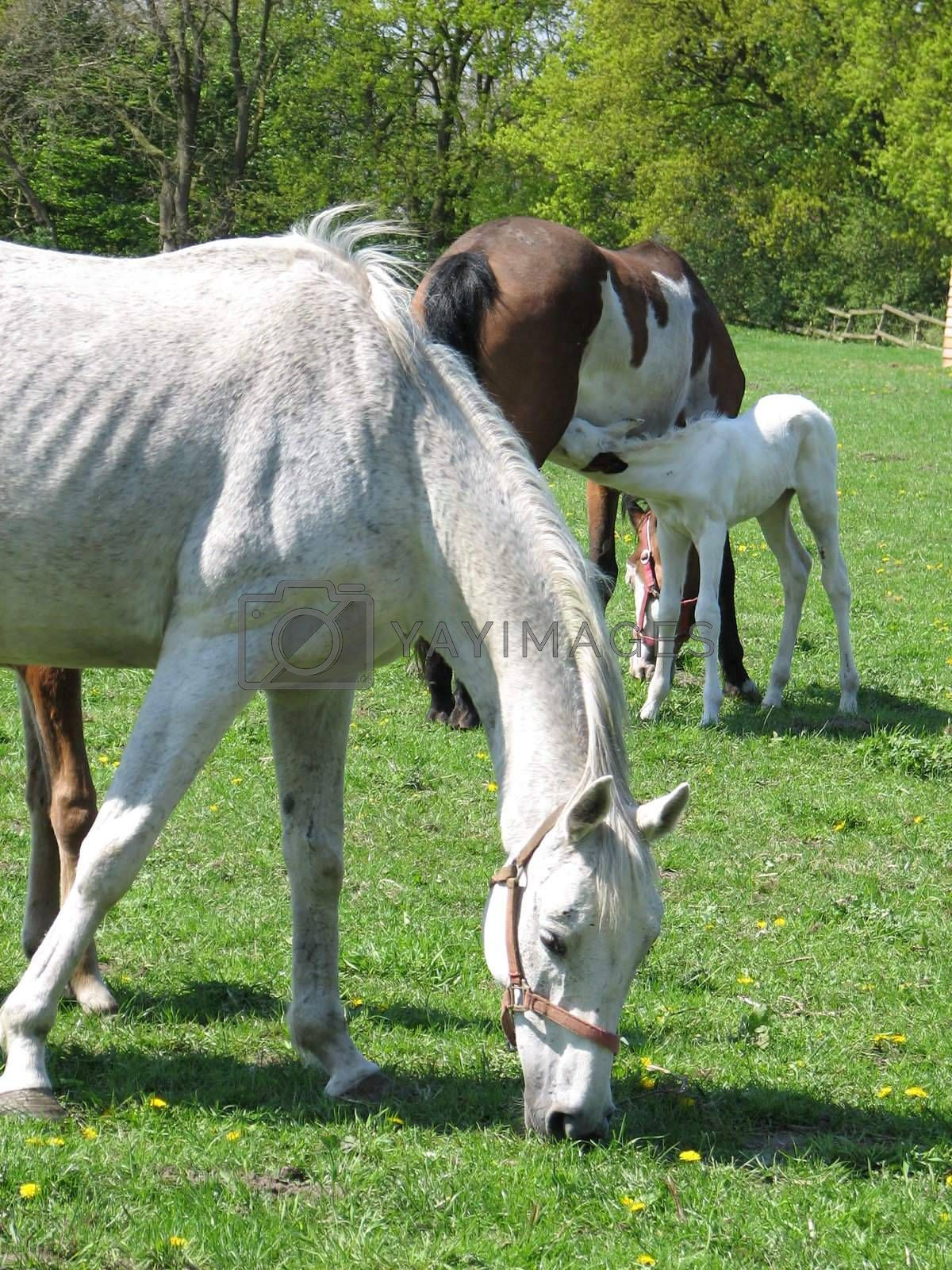 Horses in the pasture