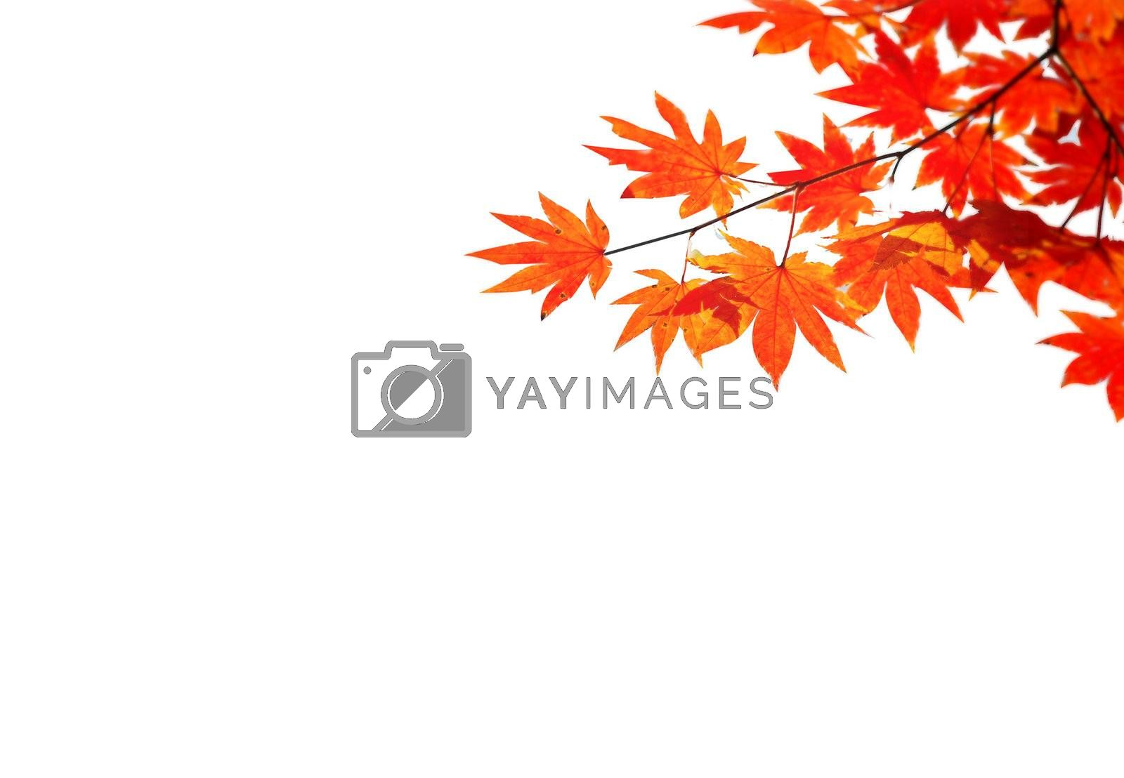 Autumn situation with red and yellow leaves for your autumn design