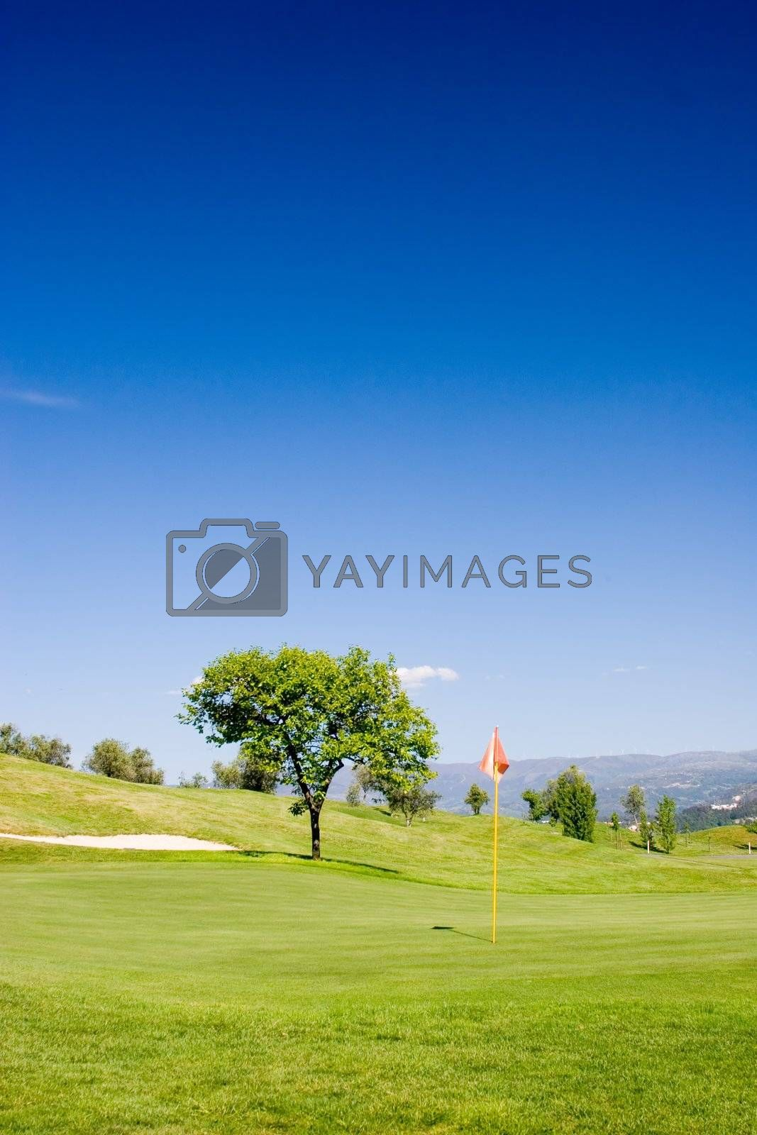 Tree and flag in golf field with deep blue sky