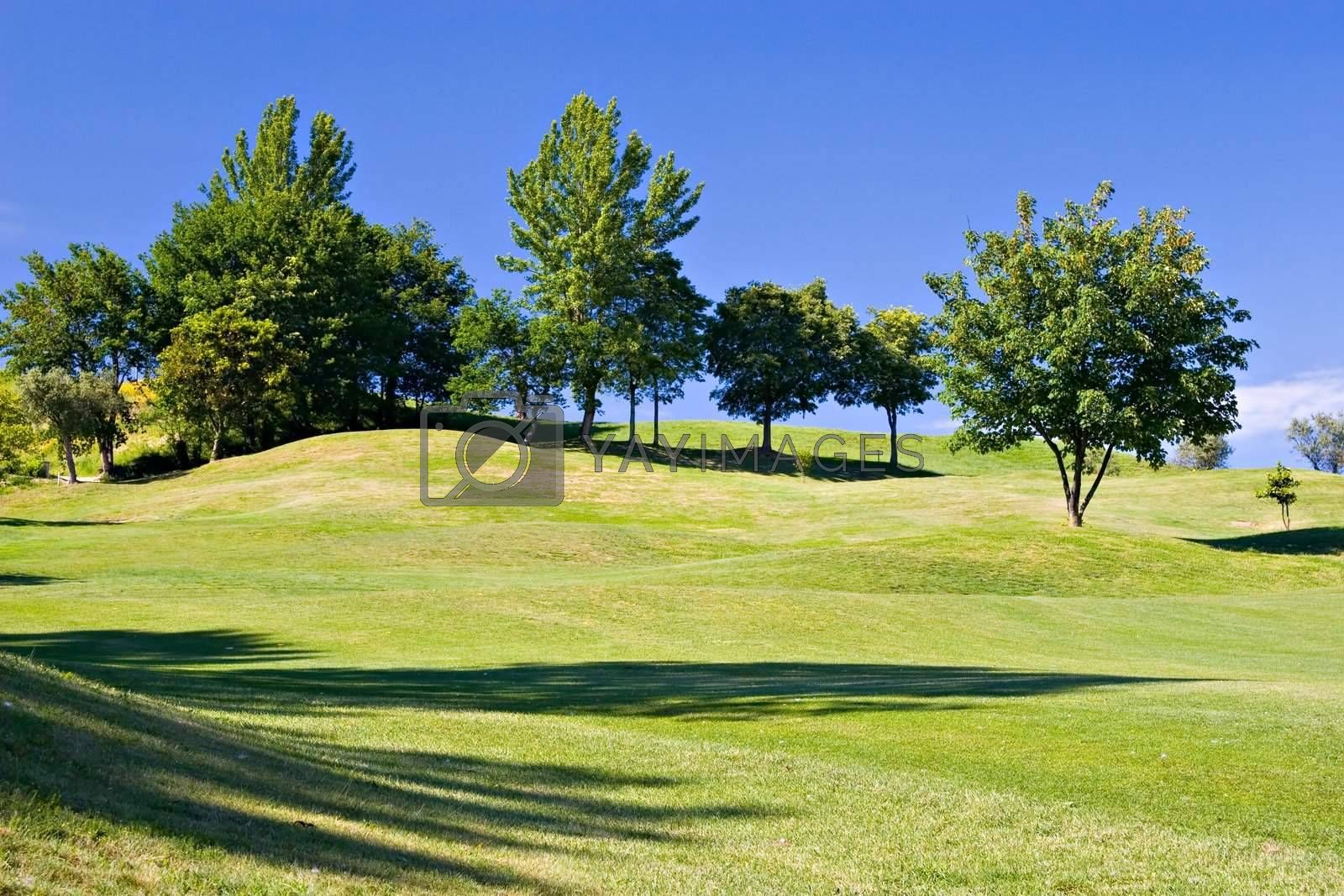 Trees in golf field with deep blue sky