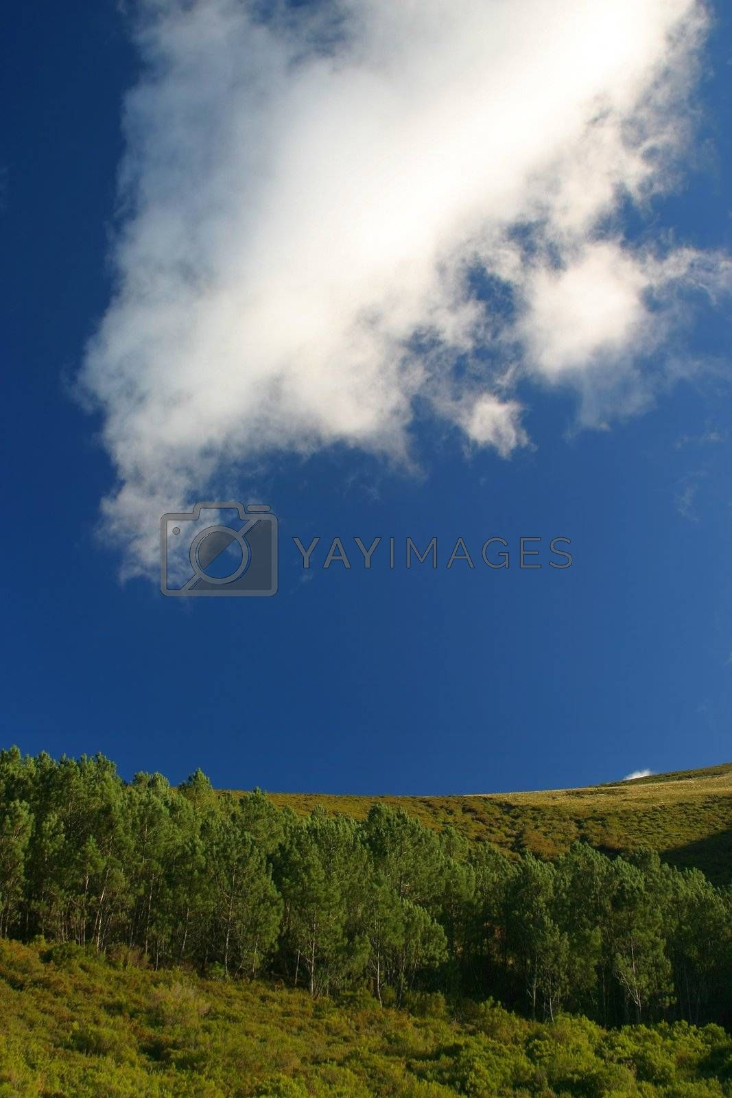 Woods on hill with blue sky and big white cloud