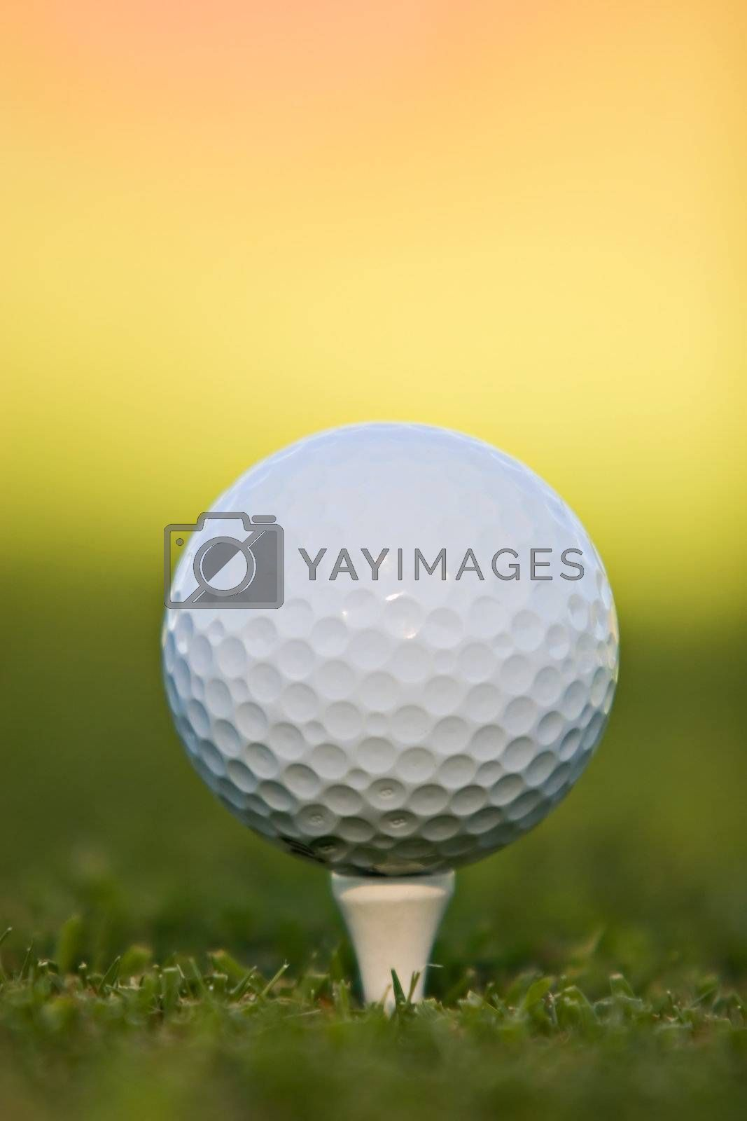 Golf ball on tee, extreme close-up.