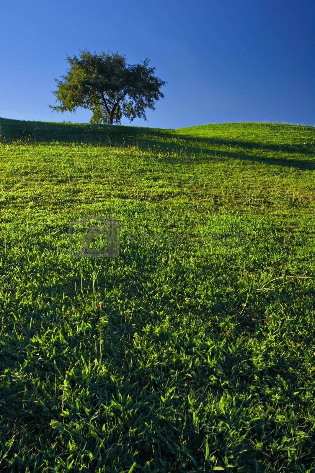 Tree on Grassland with deep blue sky.