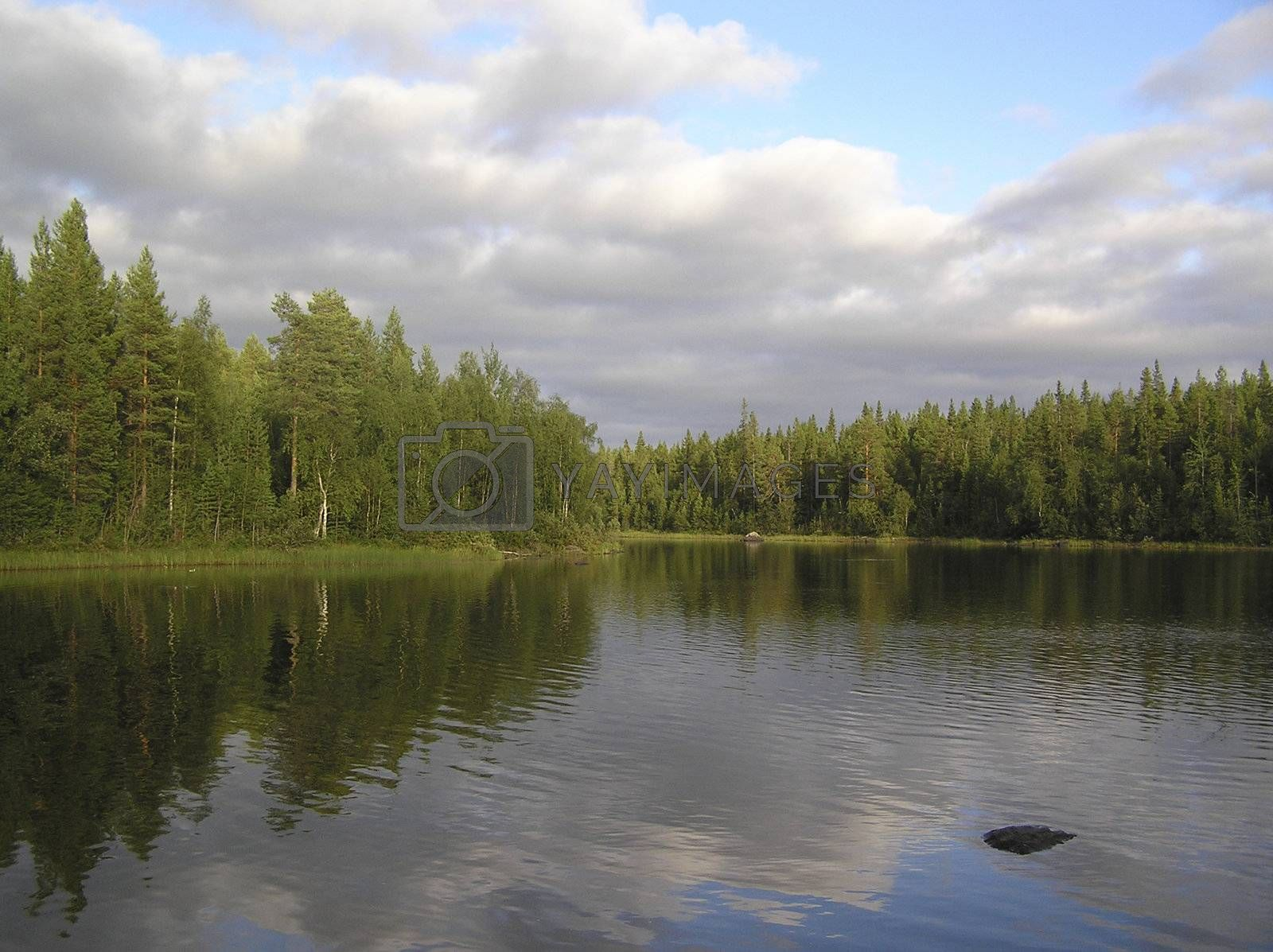 Wood lake under the blue sky, surrounded with pines