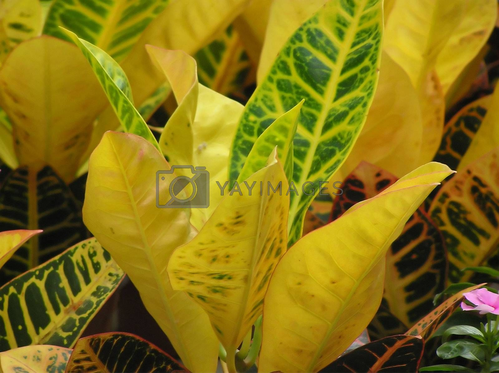 The abstract background representing leaves of exotic plants