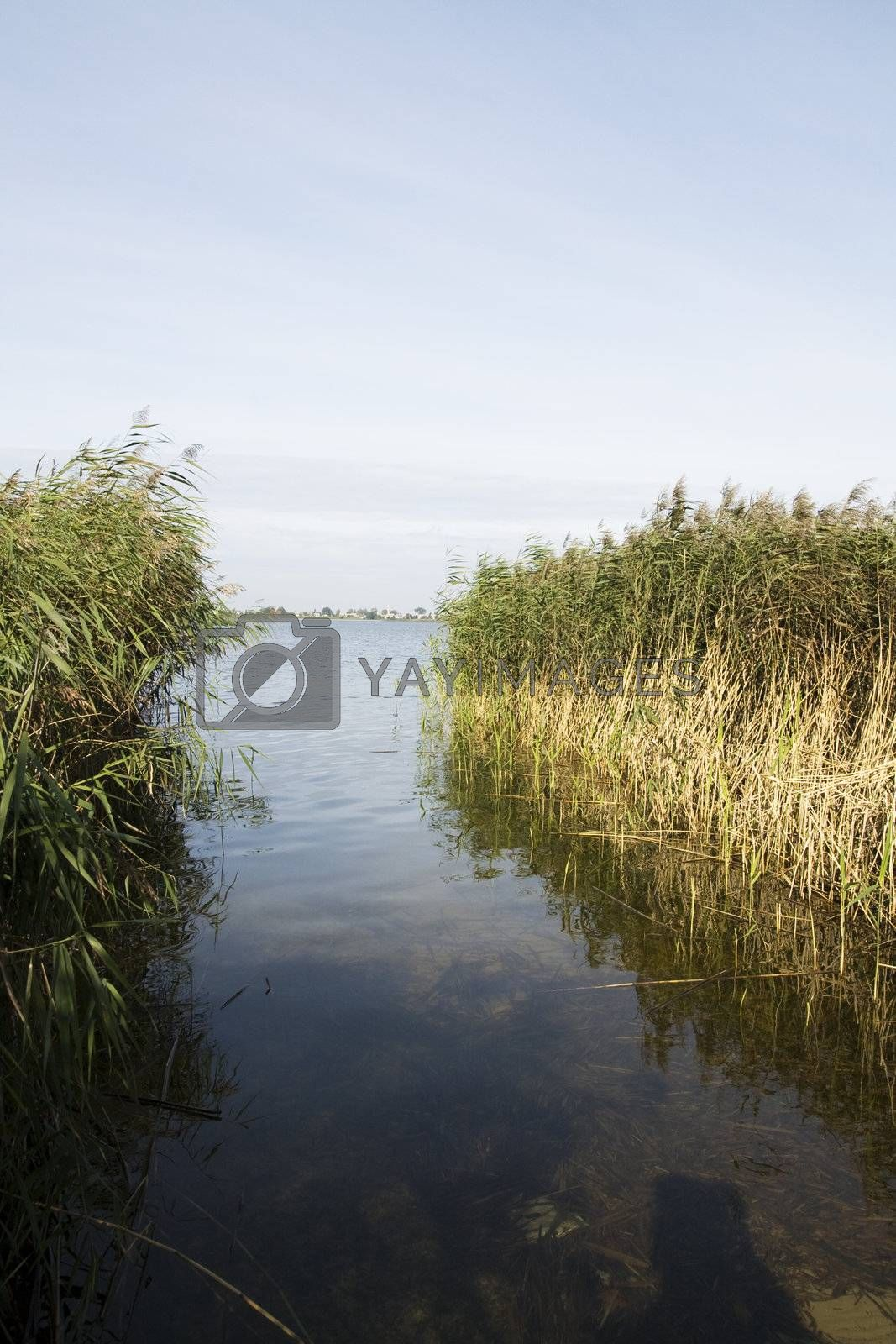 Gateway to the lake. Lithuania landscape