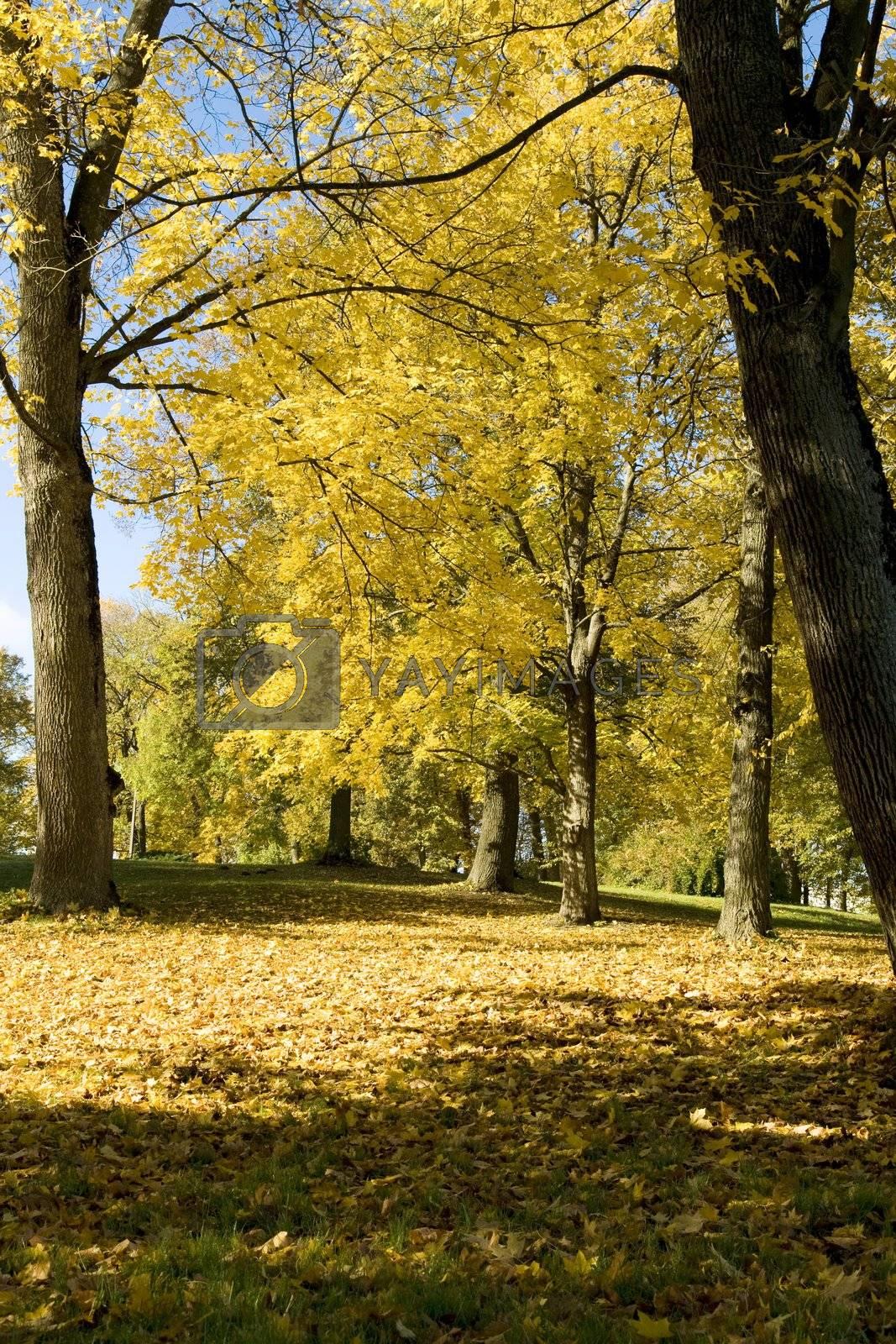 Fall colors in Paezeriai park. Lithuania