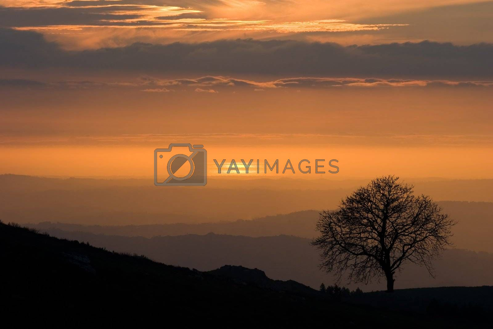View over layered mountains on a beautiful Sunset with lonely tree on the horizon.