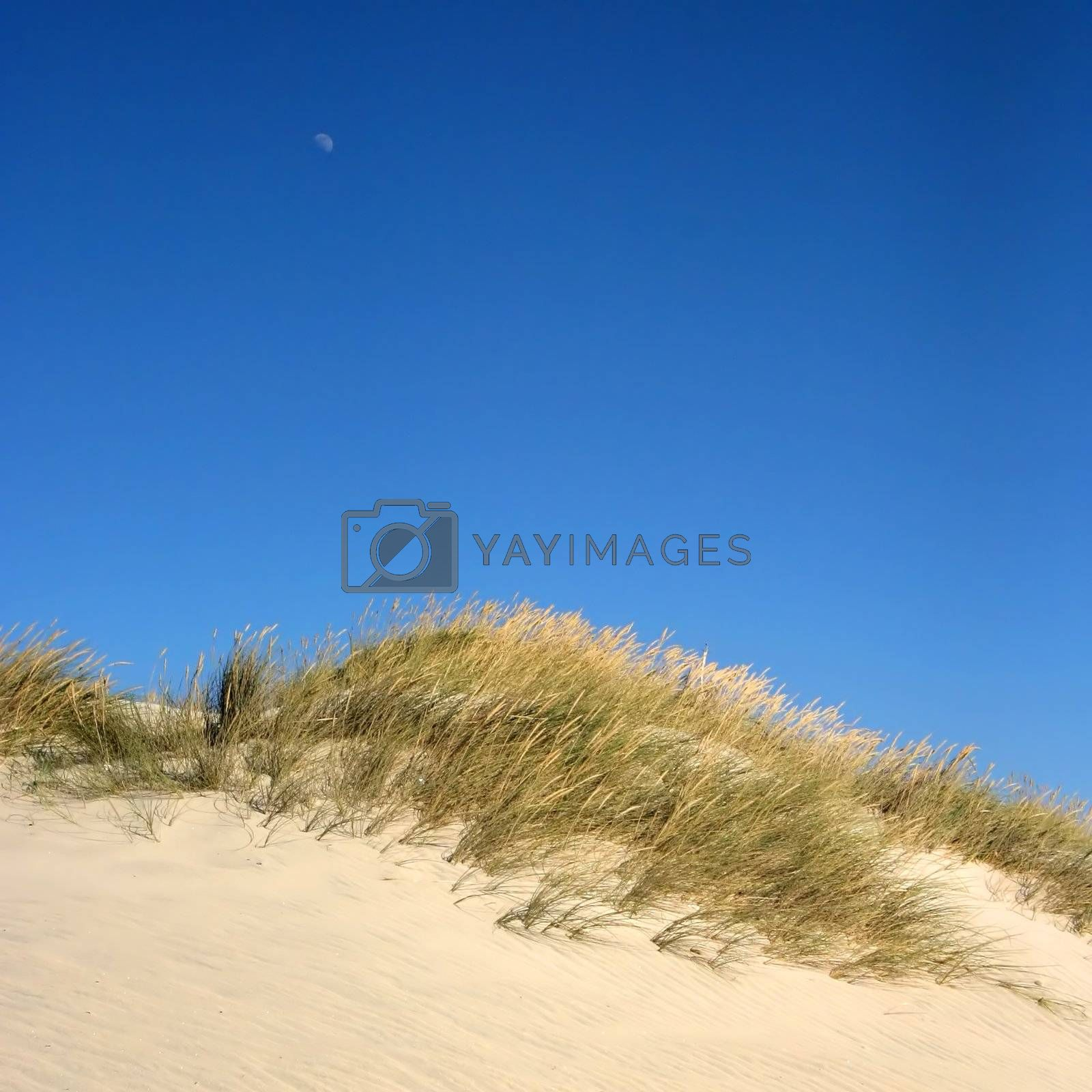 Dune with deep blue sky and the moon