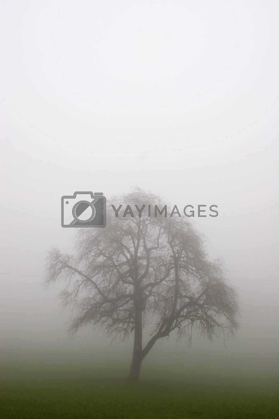 Royalty free image of Tree in the Fog by ajn